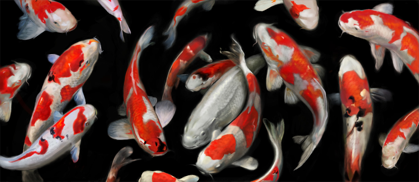 Koi fish aaron bolton fine art for Japanese koi carp paintings